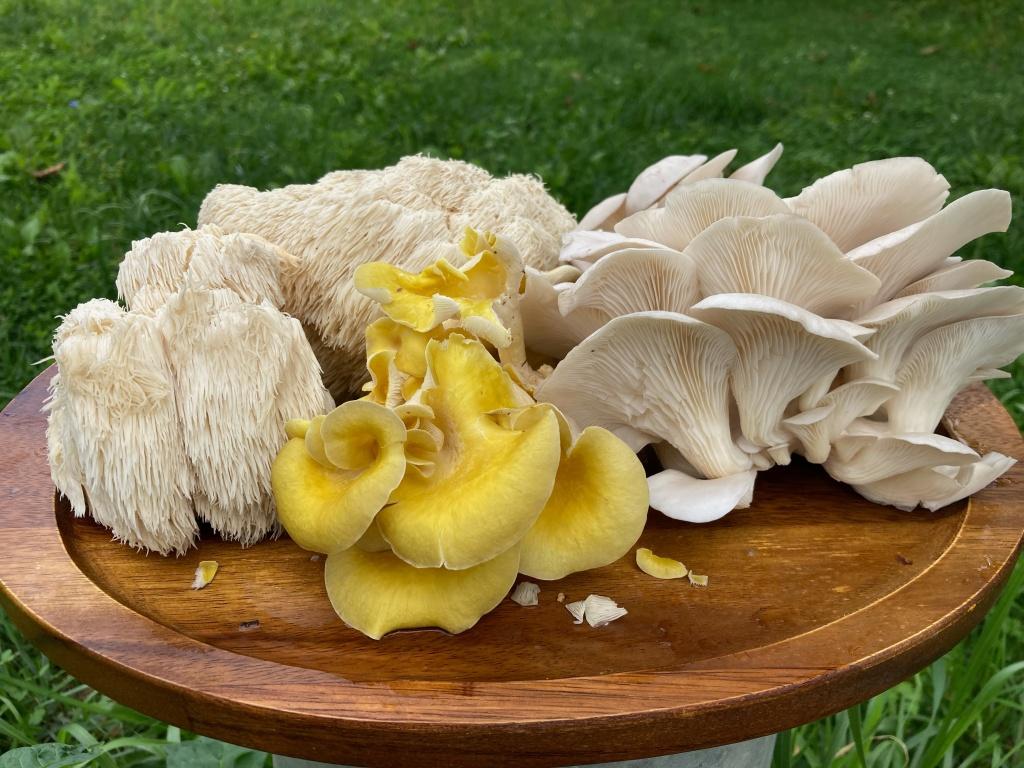 Staunton Gourmet Mushrooms